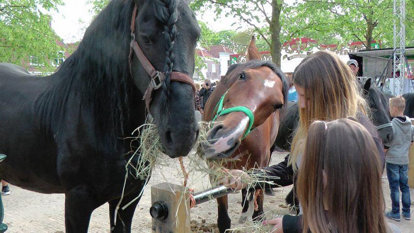 Paardenmarkt Heenvliet 2018