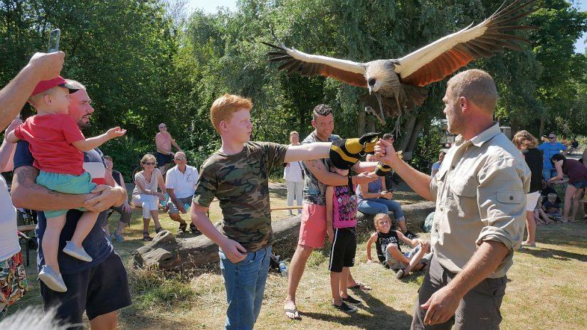 Park Waterland - Roofvogelshow 2018