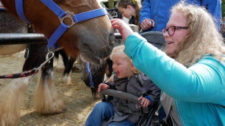 Paardenmarkt Heenvliet 2019