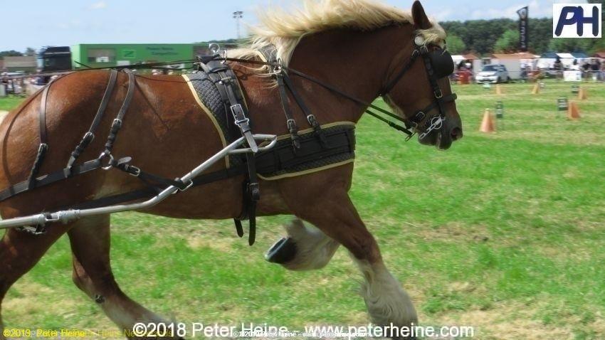 HorseP2016Rockanje84