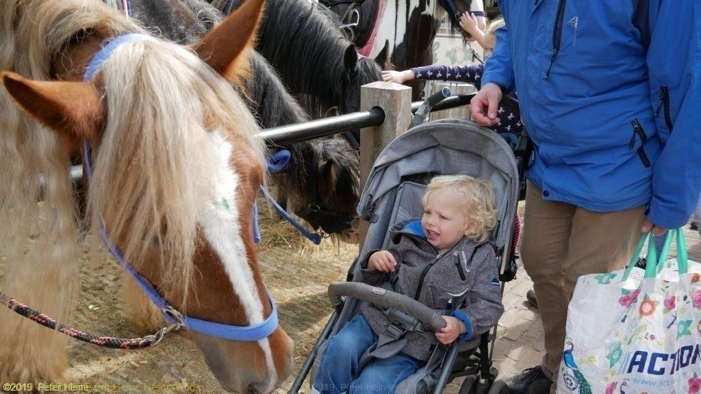 Paardenmarkt2019Heenvliet(44) (Aangepast)
